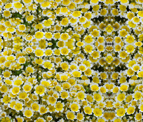 fried egg plants  fabric by lupin on Spoonflower - custom fabric