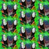 Rthree_eagles_ed_ed_ed_ed_ed_ed_shop_thumb