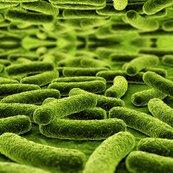 Rrrrmultidrug_resistant_mycobacterium_tuberculosis_15058261_1_shop_thumb