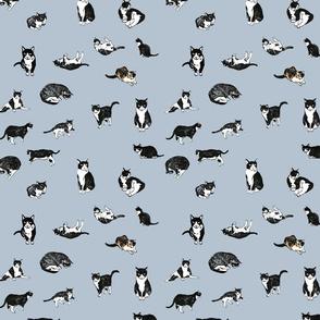 Tuxedo Cat Pattern
