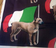 1606816_rcane_corso-_italian_flag_comment_248492_thumb
