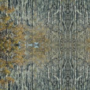 Cypress Marsh Mosh