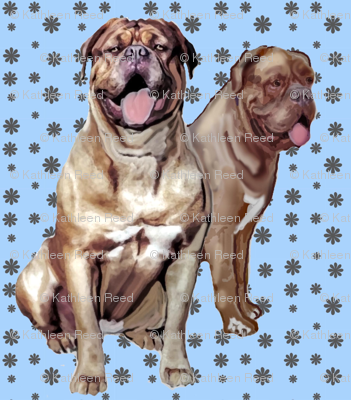 Two Dogue de Bordeaux