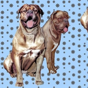 Two Dogue de Bordeaux