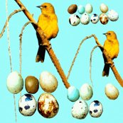 Rrbird_and_eggs_ed_shop_thumb