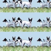 1615951_rtoy_fox_terriers_group_shop_thumb