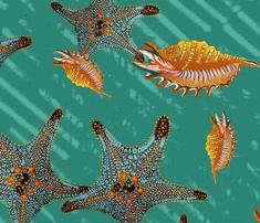 Starfish_full_quad_comment_359845_thumb