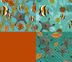 Starfish_full_quad_comment_362915_thumb