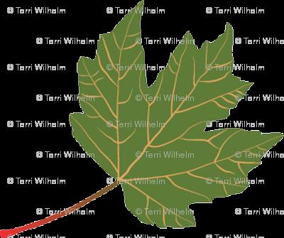 Leaf-Maple-green