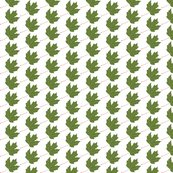 Rleaf-maple-green_shop_thumb