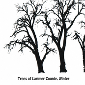 trees_of_larimer_county_30