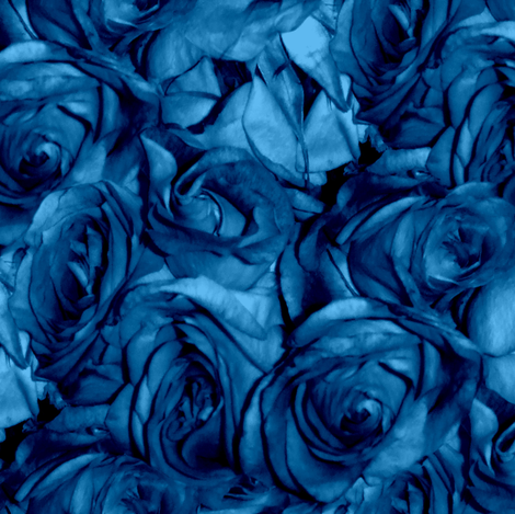 Roses Can Sing the Blues fabric by peacoquettedesigns on Spoonflower - custom fabric