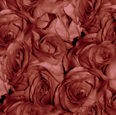 Rose' Rose fabric by peacoquettedesigns on Spoonflower - custom fabric