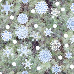 snowflake_G_Pine_2012oilify_BC