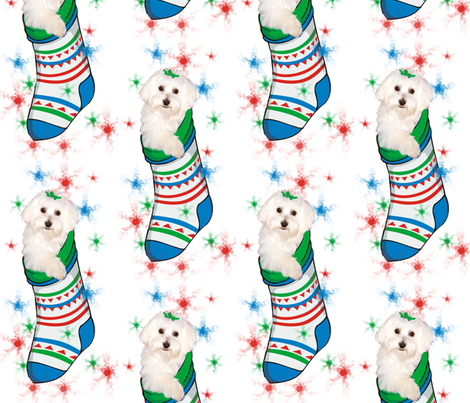 Bichon_in_stocking fabric by dogdaze_ on Spoonflower - custom fabric
