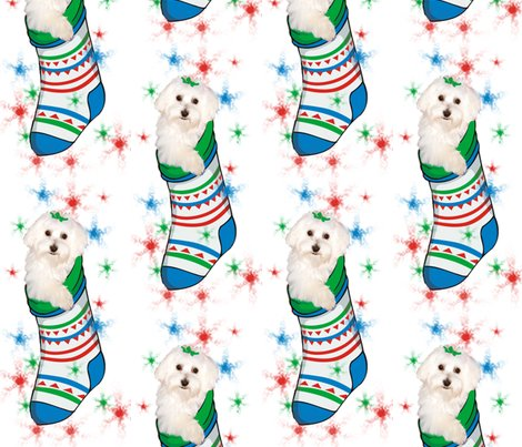 Rrbichon_in_stocking_shop_preview