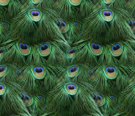 Tale_of_the_peacock_tail_by_peacoquette_designs_shop_preview