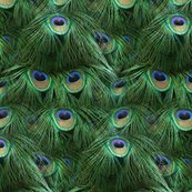 Rtale_of_the_peacock_tail_by_peacoquette_designs_shop_thumb