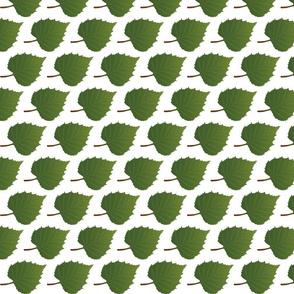 Leaf-Birch