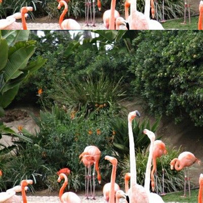 Flamingos in Balboa Park