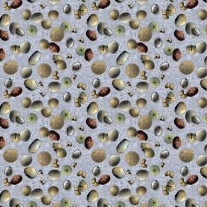 Foamy Shells - Small