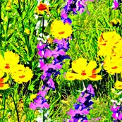 Rspringtime_on_prairie_22514_divided_mended_shop_thumb