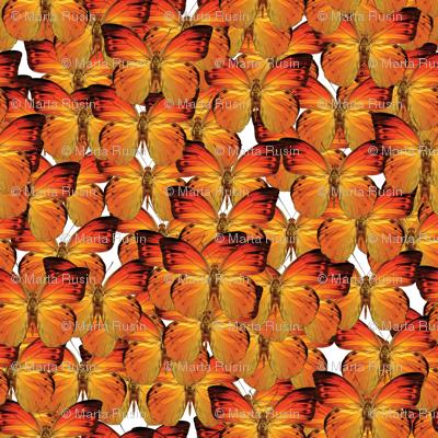 butterflies - orange