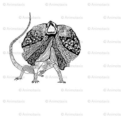 Frilled Neck Lizard 1
