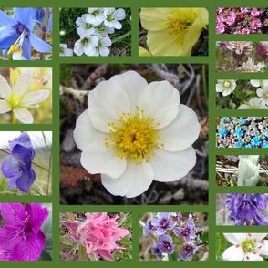 Alaska_Flowers