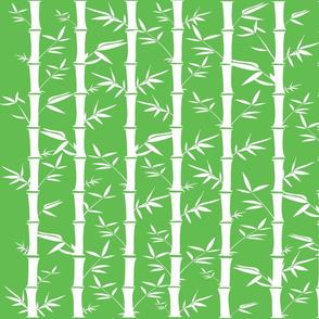Japanese bamboo garden