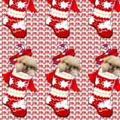 1655495_rpekingese_in_stocking_shop_thumb