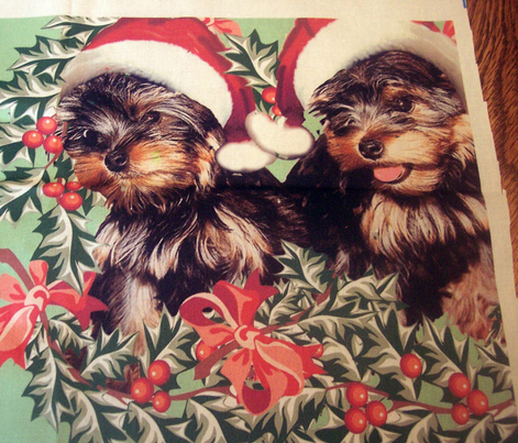 Yorkies and Christmas Holly