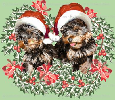 Yorkies and Christmas Holly