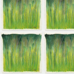 Grasses Study