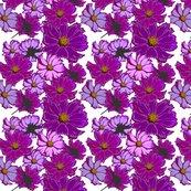 Rcosmos-flowers_shop_thumb