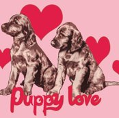 1657357_rirish_setter_puppies3_shop_thumb