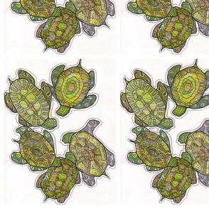Turtle Huddle
