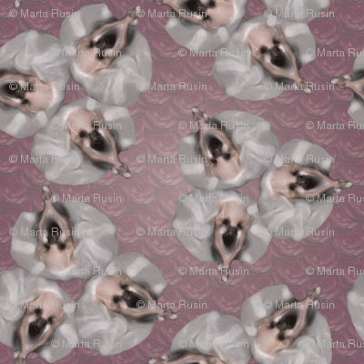 ballerinas on roses