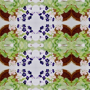 Primula and stenocarpus