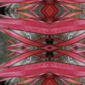 Pink Flax 1.