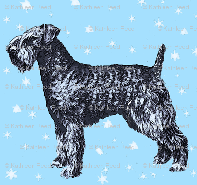 kerry_blue_terrier_with_stars