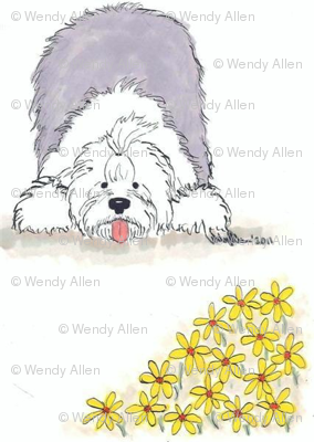 Old English Sheepdog-Daisy