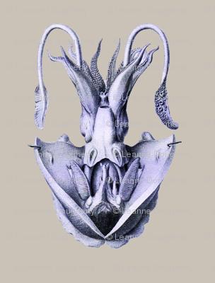 Anatomical Squid