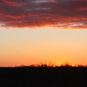 bad_birds sunset