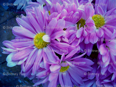 Floral Photographic