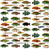 fish #1
