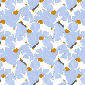 Trotting Russell Terriers - blue