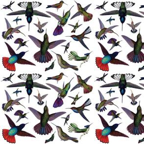 Vintage Hummingbirds