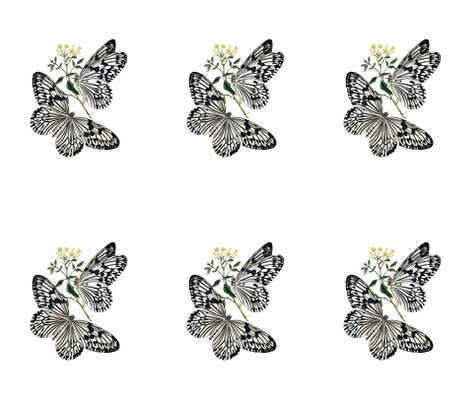 Rwhite-butterflies-image043_shop_preview