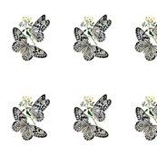 Rwhite-butterflies-image043_shop_thumb